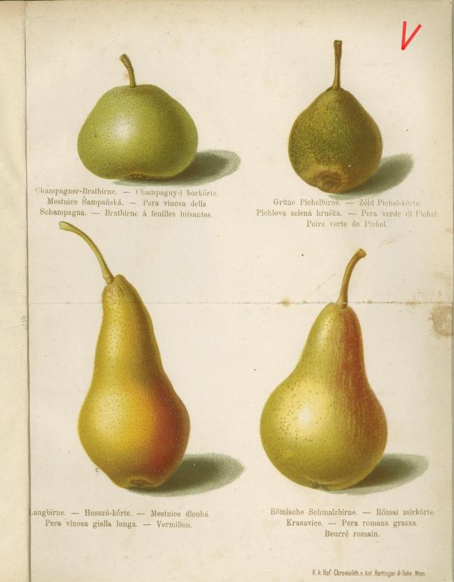 Der_Fruchtgarten_1886_1886_272_Tablica