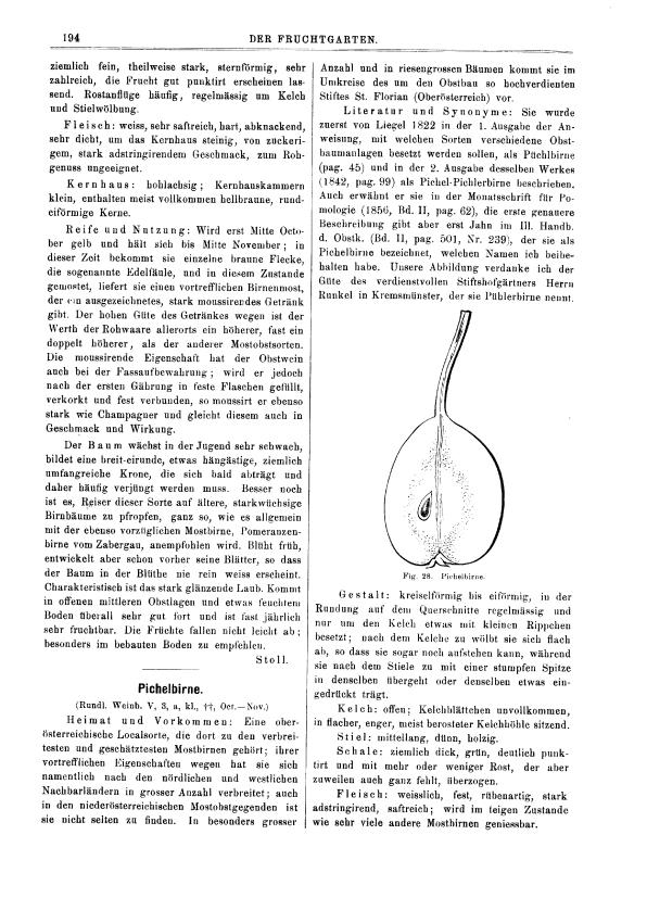 Der_Fruchtgarten_p194_1886_186